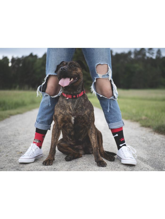 Ponožky Psík Toby Hesty Socks